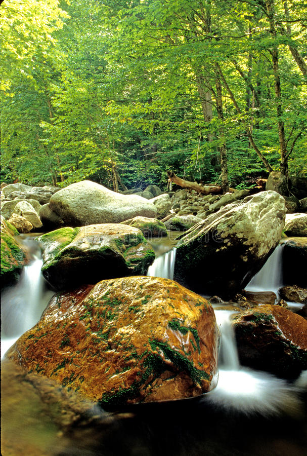 Roaring Branch creek royalty free stock images
