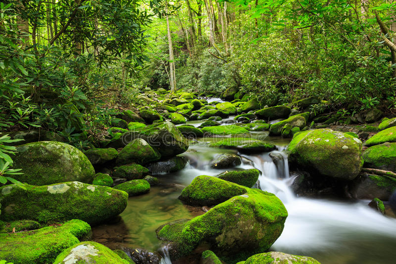 Roaring Fork Creek Mossy Rocks Great Smoky Mountains TN royalty free stock photography