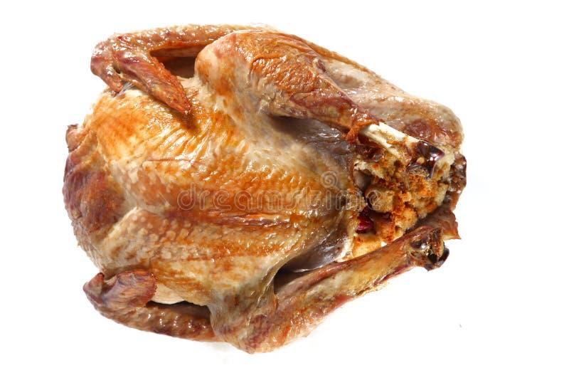 Roast turkey, isolated on white background stock images