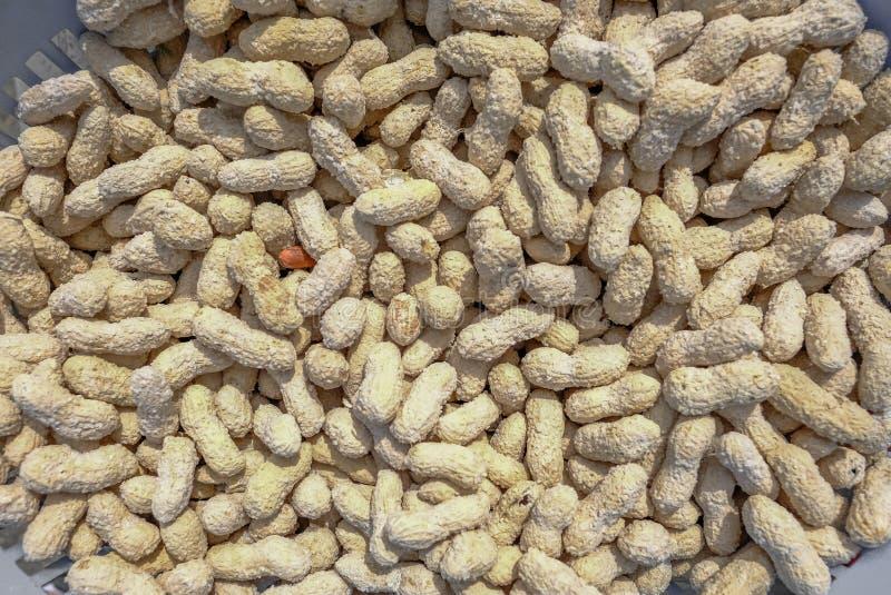 Roasted высушило арахисы в их раковинах и покрытые с солью стоковые фото