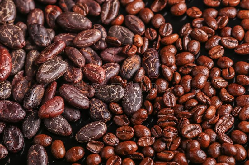 Roasted beans. Cocoa beans and coffee beans. Roasted beans. Cocoa beans and coffee beans isolated on black background stock photos