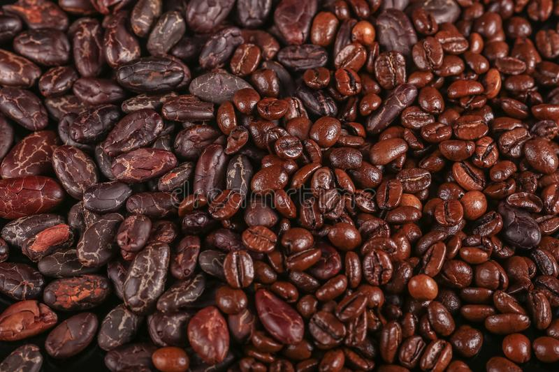 Roasted beans. Cocoa beans and coffee beans. Roasted beans. Cocoa beans and coffee beans isolated on black background stock images
