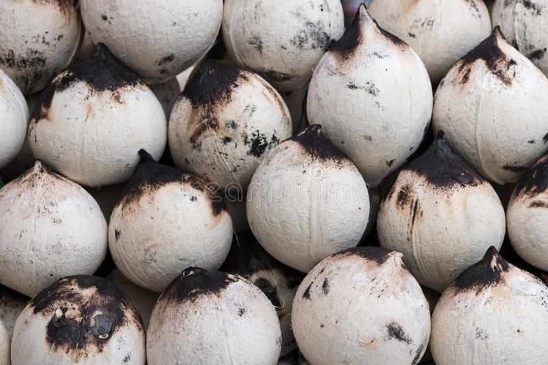 Roasted coconuts peeled stock photography