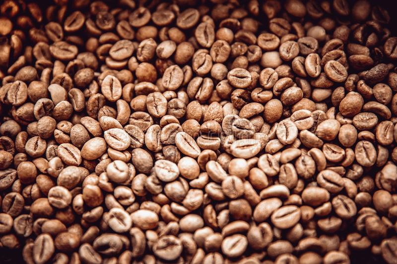 roasted coffee beans. ready for making high quality drinks. like espresso, latte or cappuccino stock photos