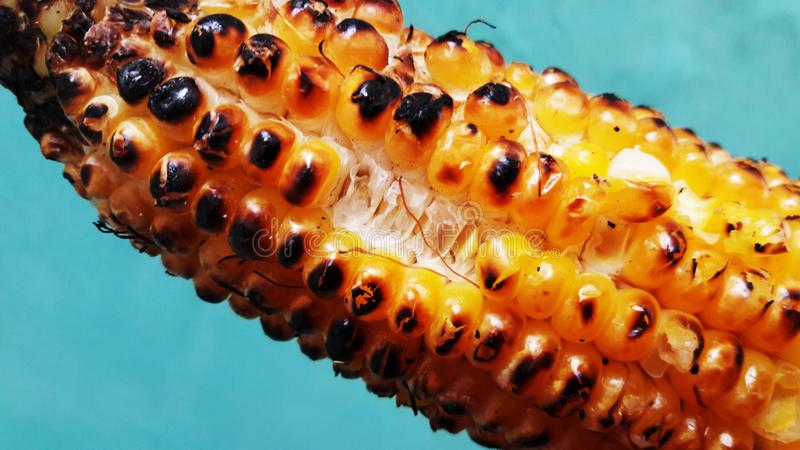 Roasted corn closeup image isolated on green background. Roasted corn closeup image isolated on green. Alternative, ripe, nature, science, summer, growth royalty free stock images
