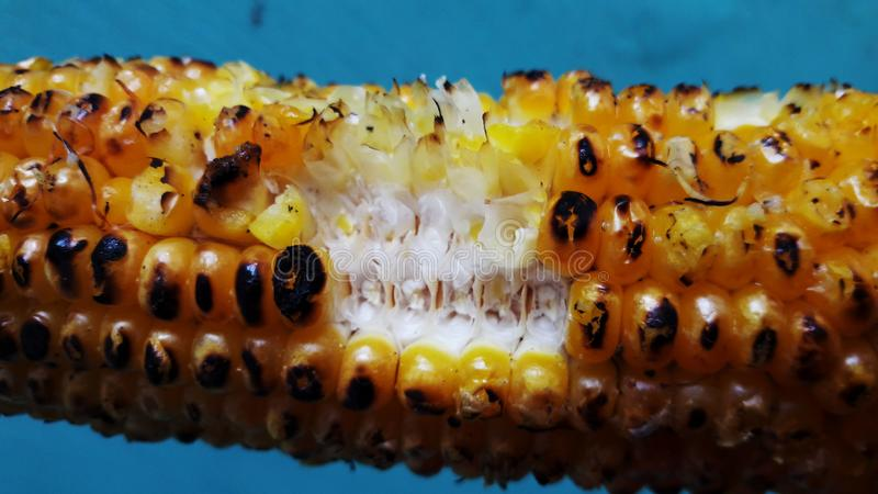 Roasted corn closeup image isolated on green background. Alternative, ripe, nature, science, summer, growth, industry, plant, lifestyle, fuel, scene, snack stock images