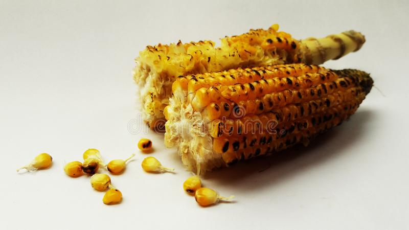 Roasted corn closeup image isolated on white background. Alternative, ripe, nature, science, summer, growth, industry, plant, lifestyle, fuel, scene, snack stock photography