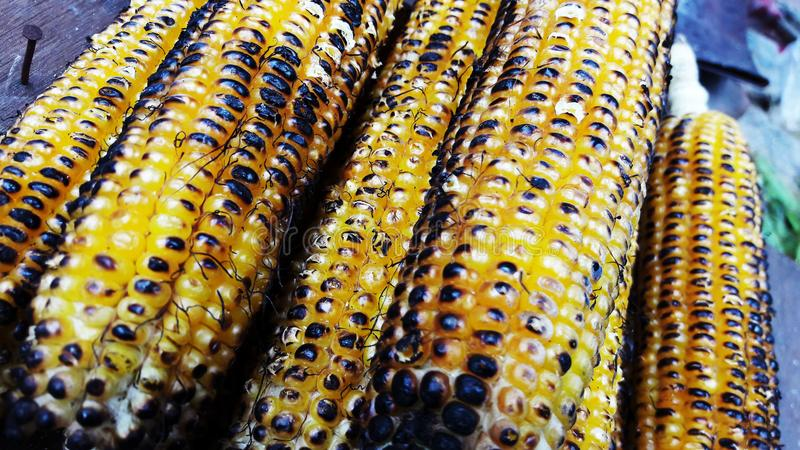 Roasted corns closeup image isolated on black. Alternative, ripe, nature, science, summer, growth, industry, plant, lifestyle, fuel, scene, snack, eating royalty free stock photography