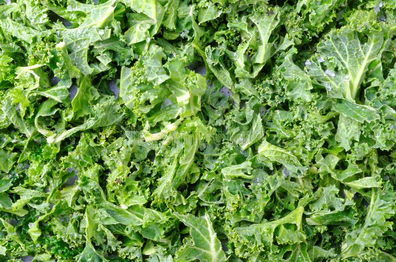 Roasted Curly Kale royalty free stock photos
