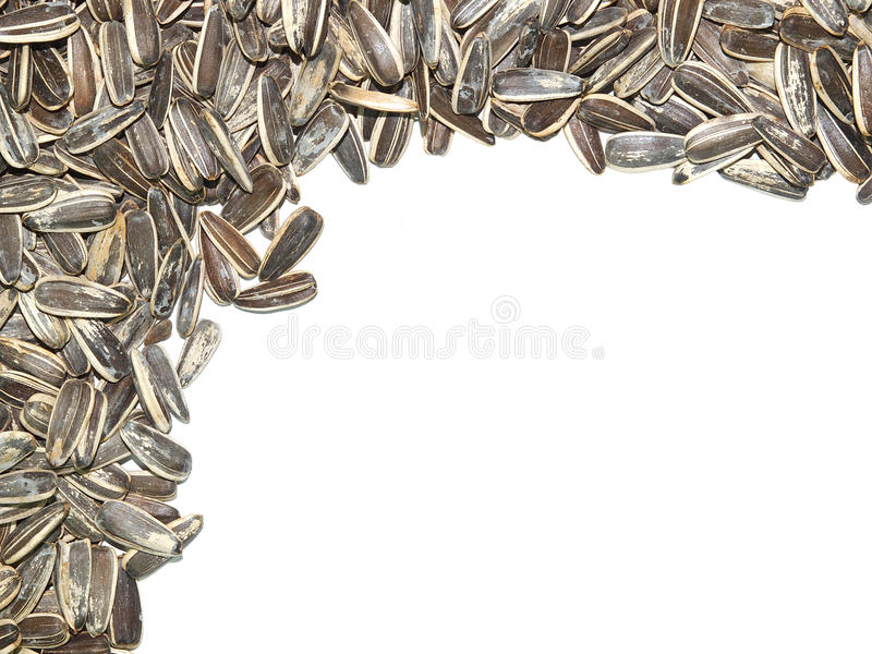 Roasted and salted sunflower seeds stock image