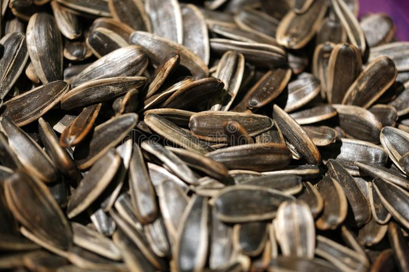 Roasted sunflower seeds closeup. Concept: design, background royalty free stock photo