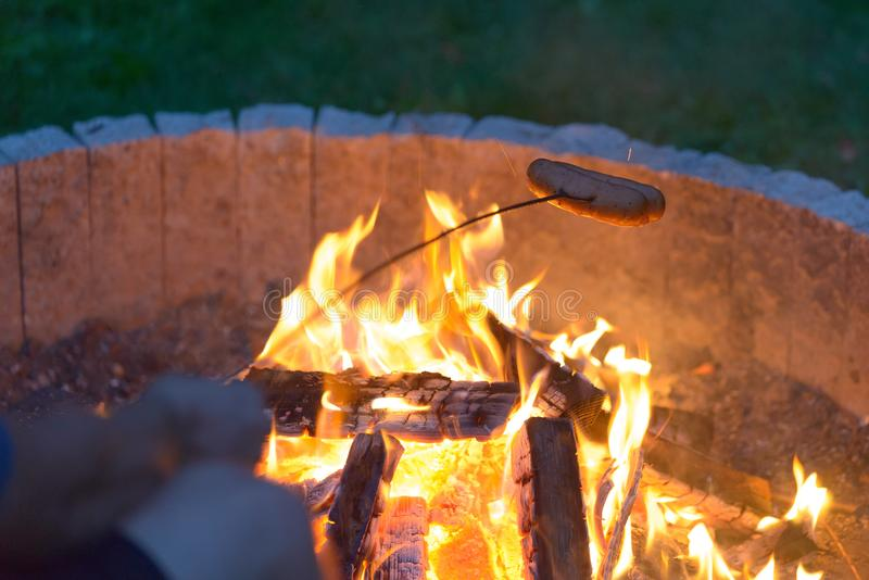 Roasting sausages on the campfire stock image