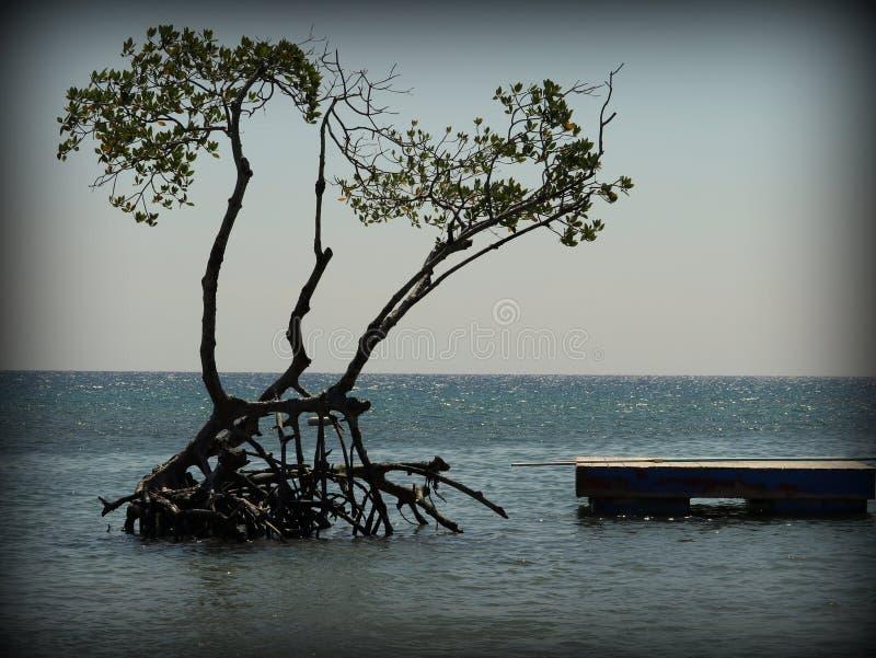 Roatan beach tree royalty free stock photos