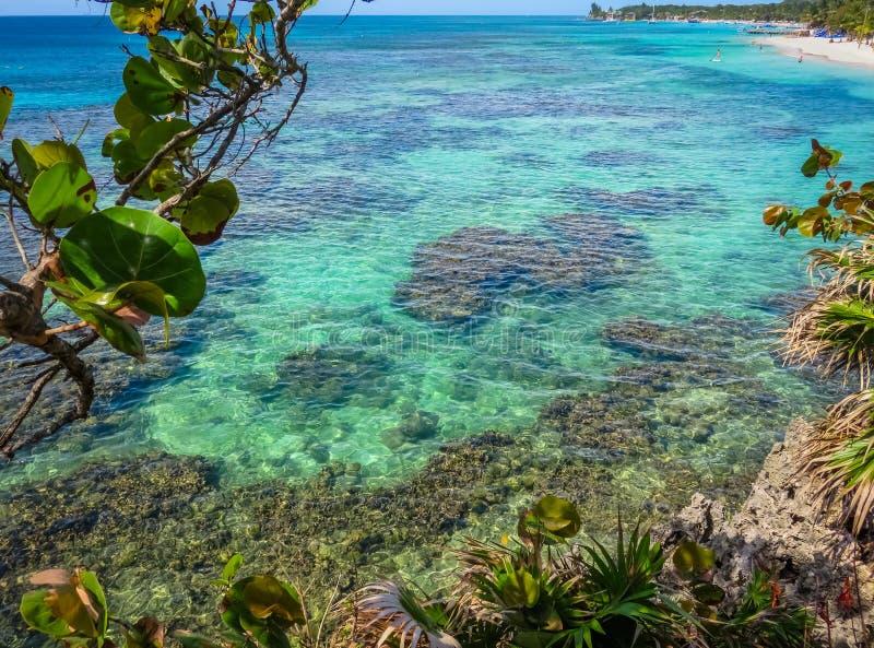Roatan Honduras det blåa havet, reven, vegetation som växer på, vaggar Tropisk exotisk ö, semester, semesterort, sandig strand i  royaltyfria foton