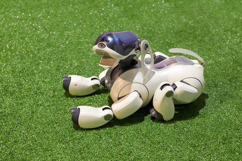 Robô do cão AIBO com os brinquedos na exposição fotos de stock royalty free