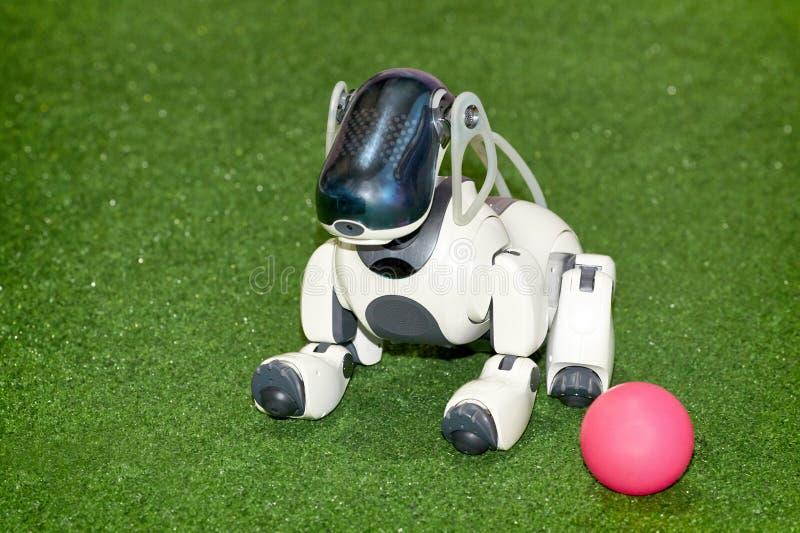 Robô do cão AIBO com uma bola na exposição foto de stock