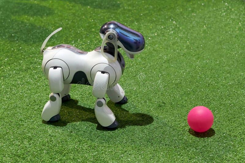 Robô do cão AIBO com uma bola na exposição imagem de stock