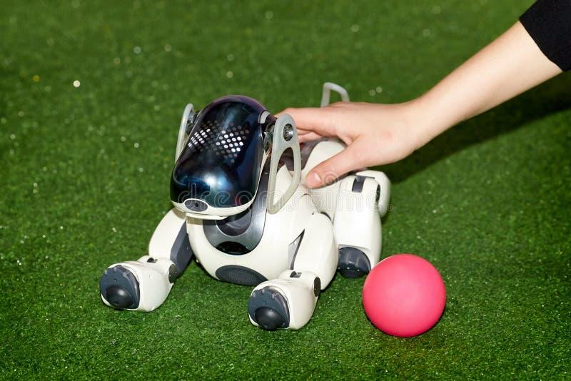 Robô do cão AIBO com uma bola na exposição fotografia de stock royalty free