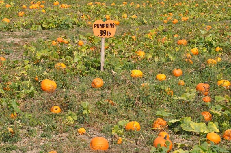 Roba-Familien-Bauernhöfe in Nord-Abington-Gemeinde in Pennsylvania lizenzfreie stockfotos
