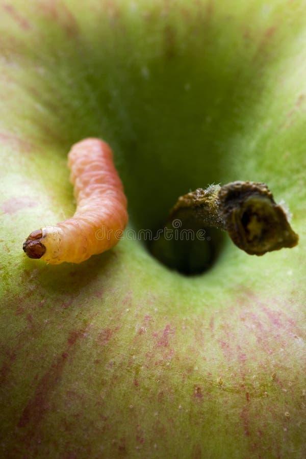robak obrazy stock