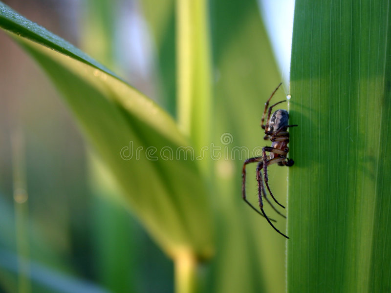 robaki życie s zdjęcie stock