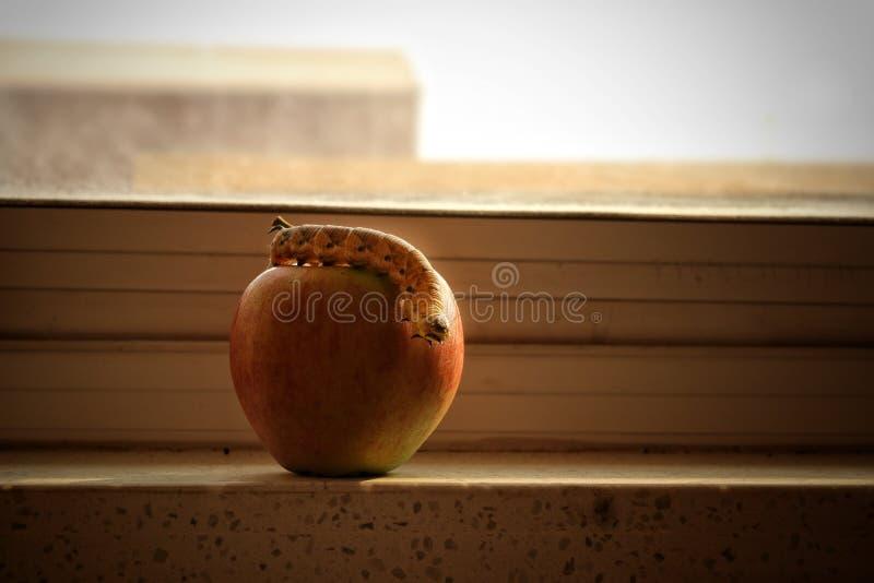 Robaki jabłkowe zdjęcie stock
