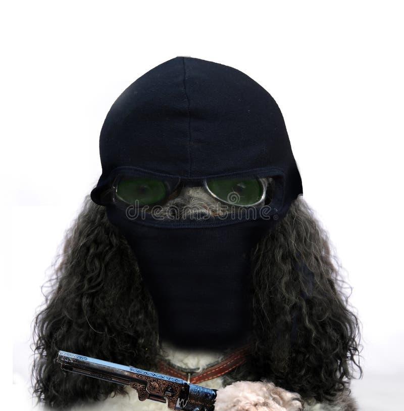 Robber dog royalty free stock image