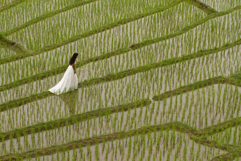 Robe nuptiale blanche avec la belle jeune femme romantique dans la rizière en terrasse images libres de droits