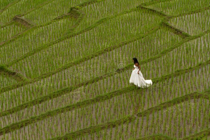 Robe nuptiale blanche avec la belle jeune femme romantique dans la rizière en terrasse photo stock