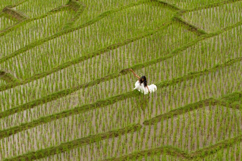 Robe nuptiale blanche avec la belle jeune femme romantique dans la rizière en terrasse photographie stock libre de droits