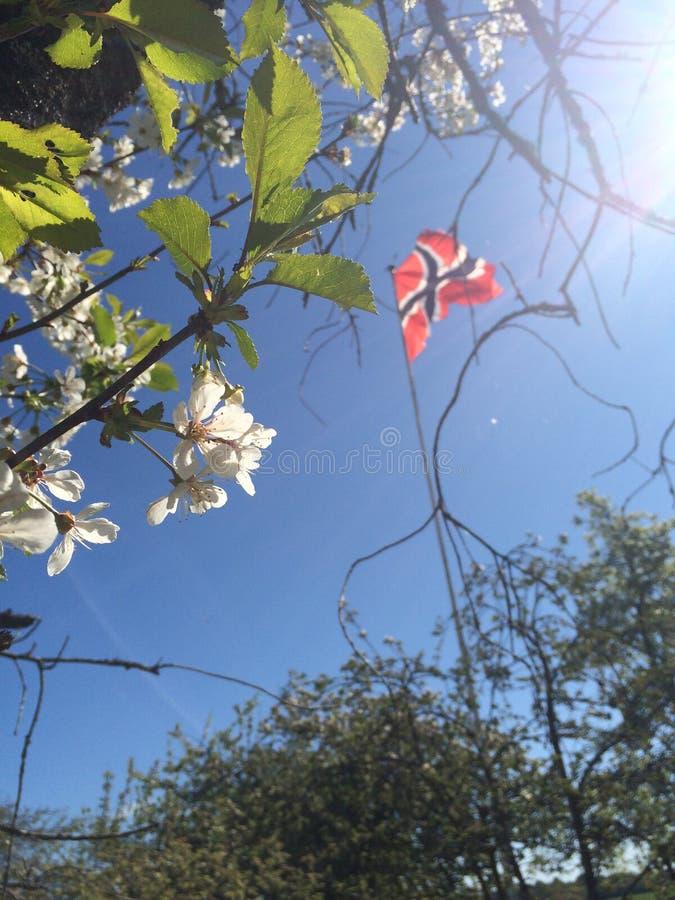 robić błękitny flaga norweski czerwieni wektoru biel fotografia stock