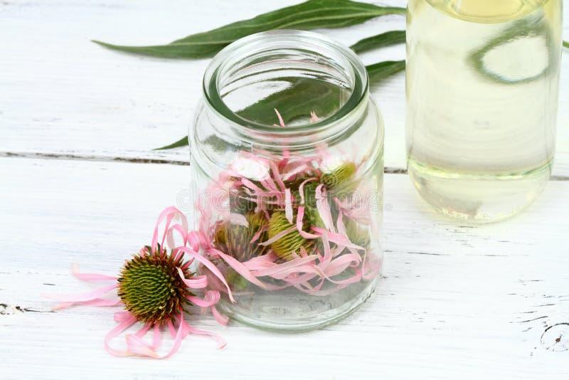 Robić tincture od Wąskiego liść purpur rożka kwitnie obraz stock