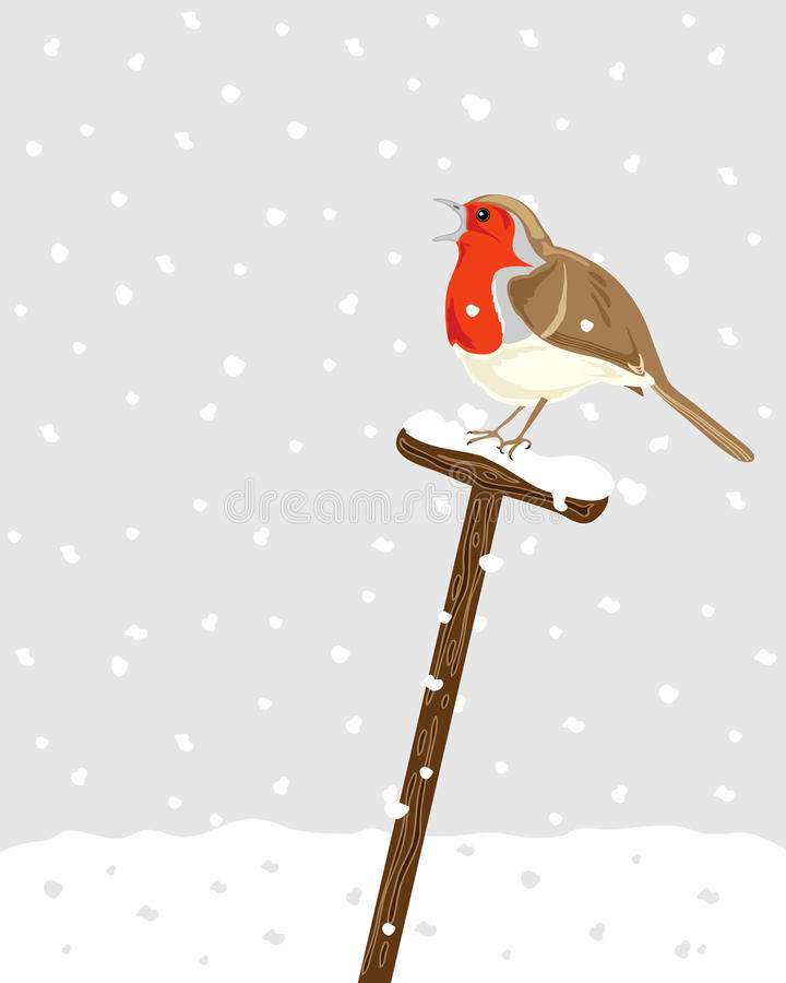 Robin stock illustration