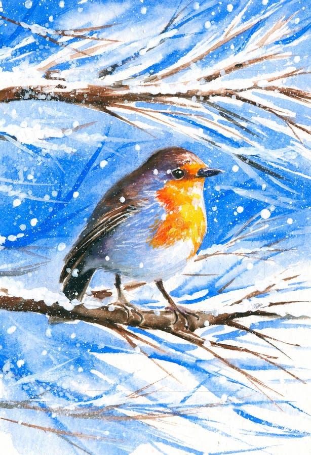 Robin illustration stock
