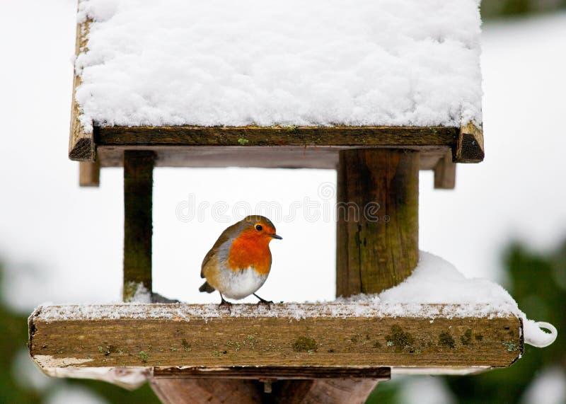 Robin bij een sneeuwvogelvoeder in de winter