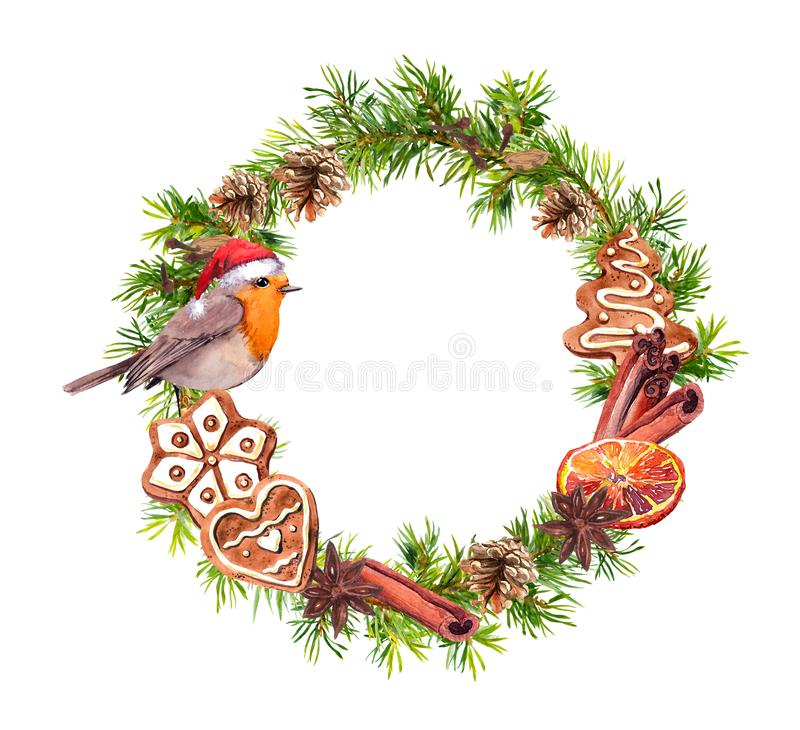 Robin bird in red holiday hat, ginger cookies, cinamon, orange. Christmas wreath with fir tree branches, cones. New year. Robin bird in red holiday hat, ginger stock illustration
