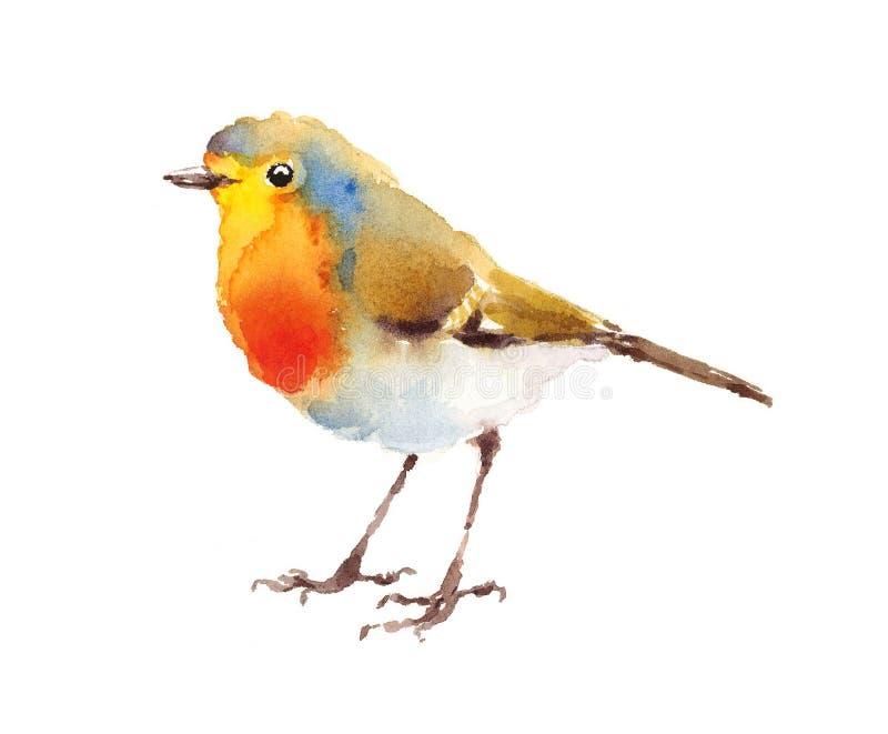 Robin Bird Watercolor Illustration Hand malte lizenzfreie abbildung
