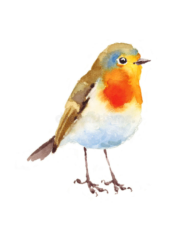 Robin Bird Watercolor Illustration Hand Painted Stock ...