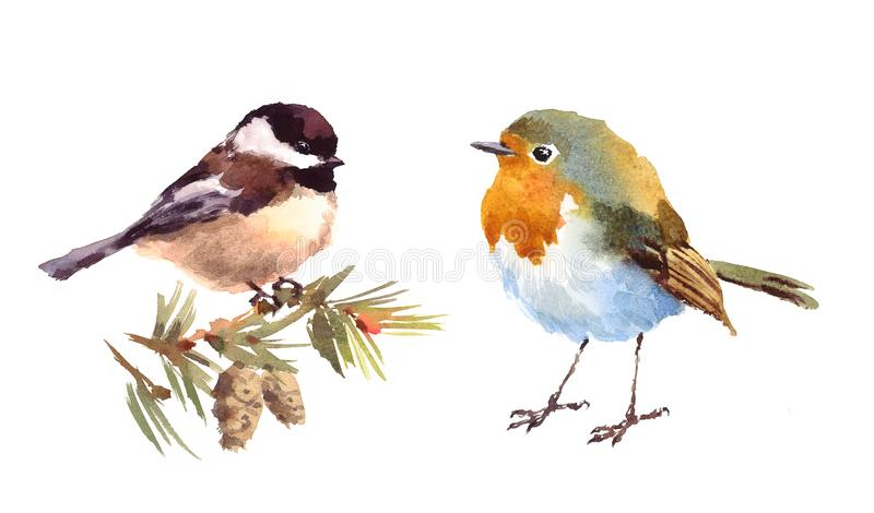 Robin and Chickadee Birds Watercolor Illustration Set Hand Drawn. Hand drawn Watercolor illustration Set of Robin and Chickadee Birds isolated on white vector illustration
