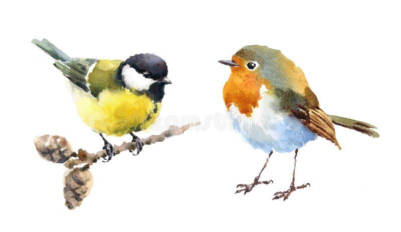 Robin e disegnato a mano stabilito dell'illustrazione dell'acquerello degli uccelli del capezzolo royalty illustrazione gratis