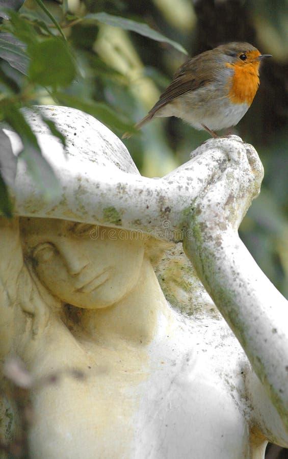 Robin et statue images stock