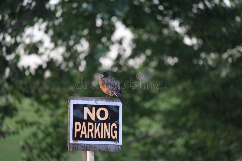 Robin grincheux sur le signe de stationnement interdit photographie stock