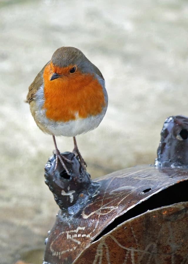 Robin hockte auf einem Metallfrosch lizenzfreie stockbilder