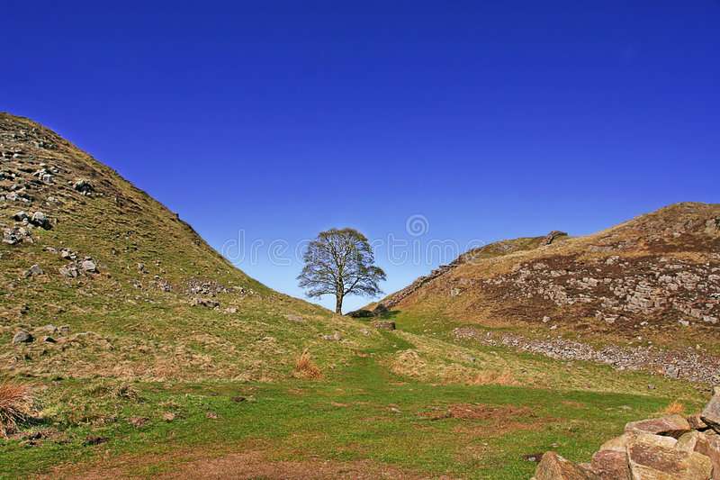 robin okapturza drzewa fotografia royalty free