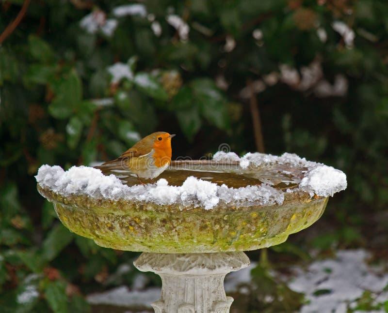 Robin op vogelbad in sneeuw