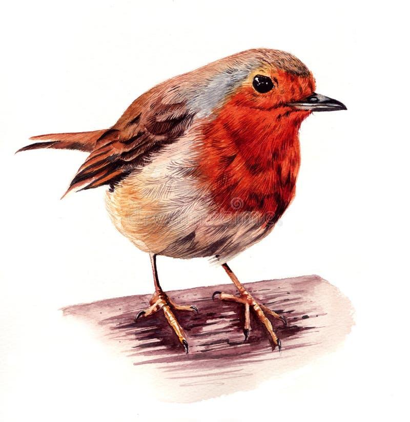 Robin Red Breast stock illustrationer