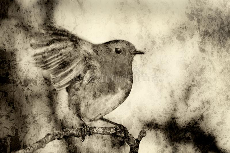 Robin redbreast monochrome textured effect. Robin redbreast Erithacus rubecula monochrome textured effect on a branch of a winter woodland tree royalty free stock photos