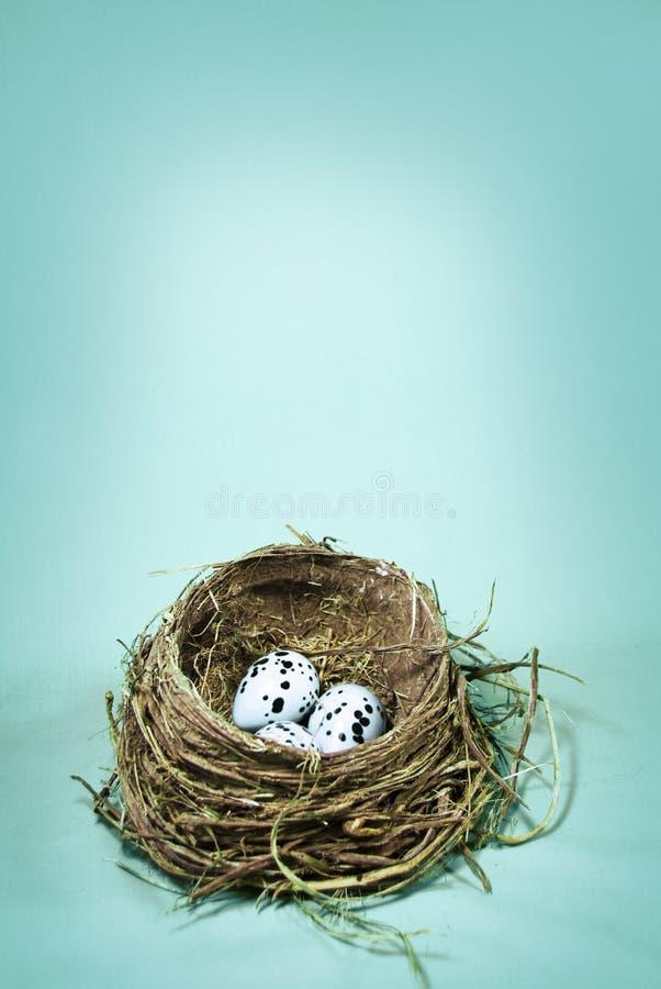 Robin's Nest royalty free stock photos