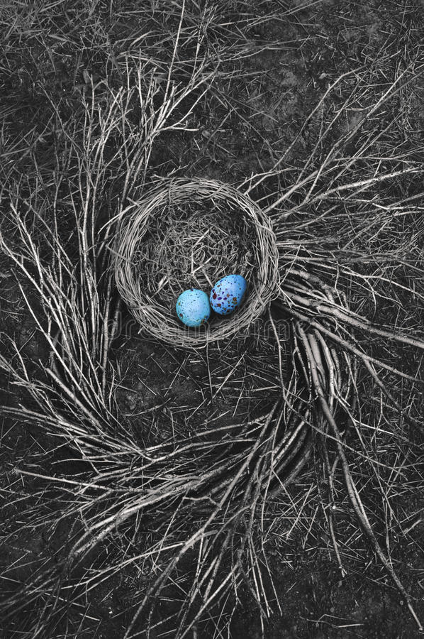 Free Robin`s Nest On Ground With Twigs Stock Photos - 86561163