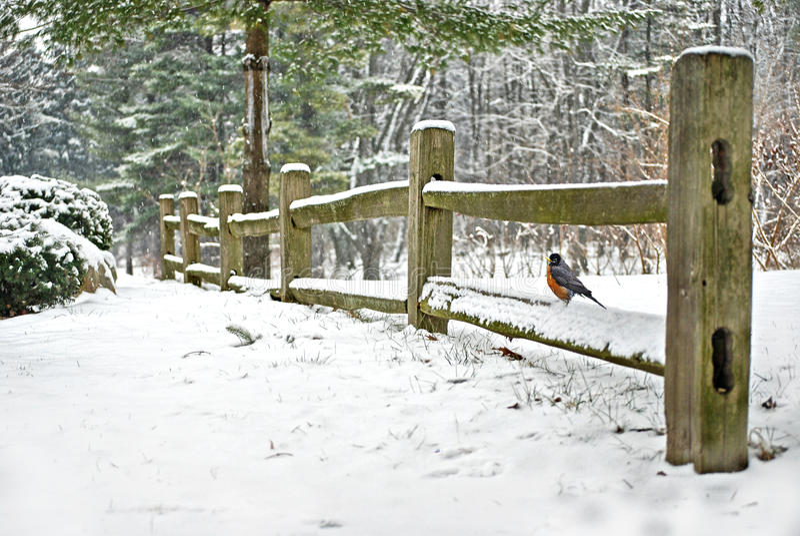 Robin sur la barrière en hiver image stock